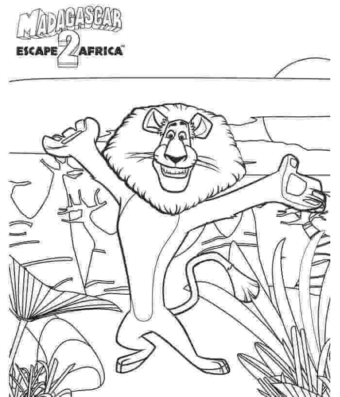 Madagascar Lion