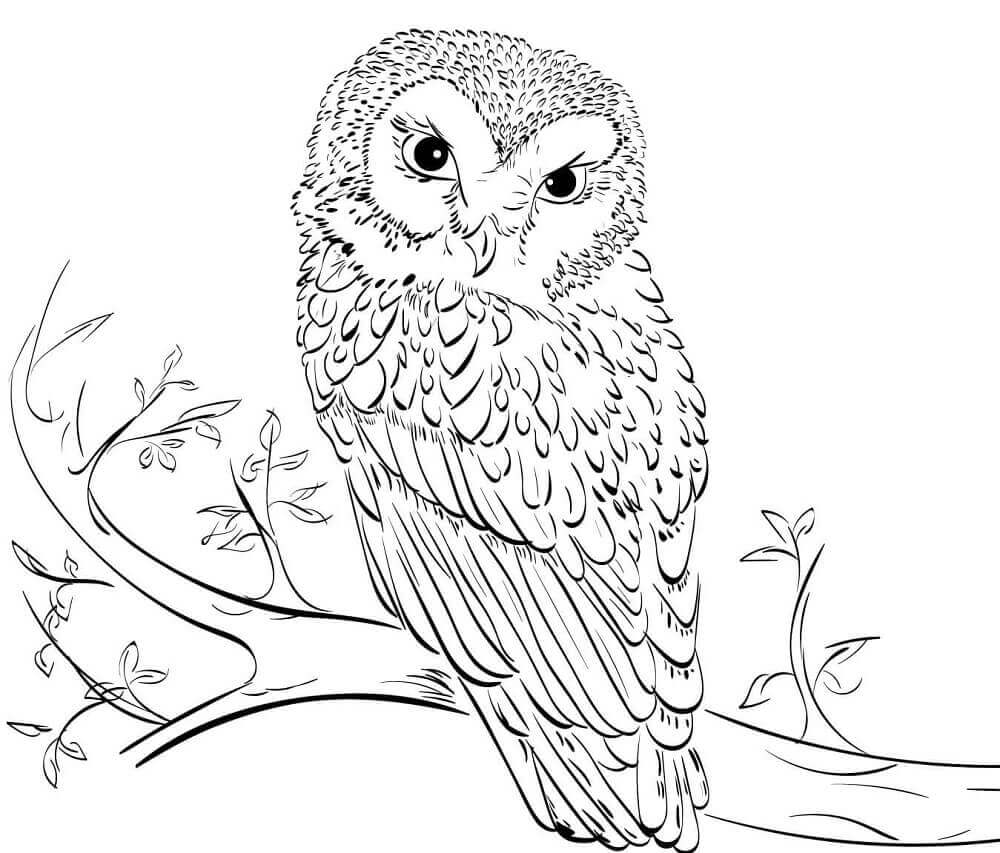 Owl Colouring Pages