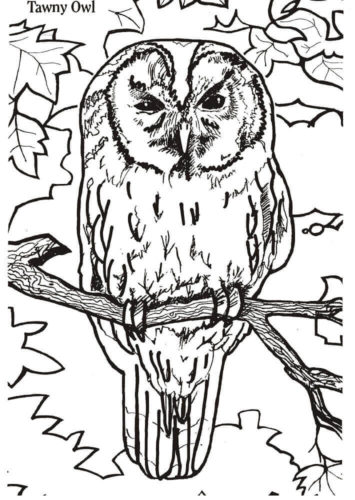 Tawny Owl Coloring Page