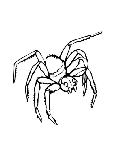 27 Free Spider Coloring Pages Printable