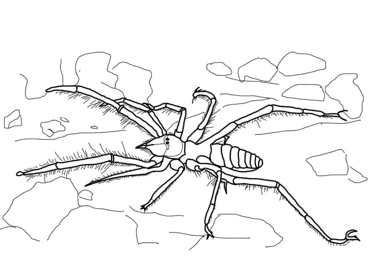 Camel Spider coloring page