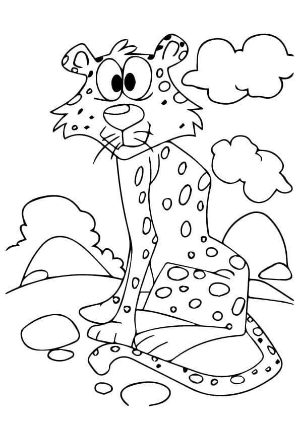 Cheetah Looks Bewildered