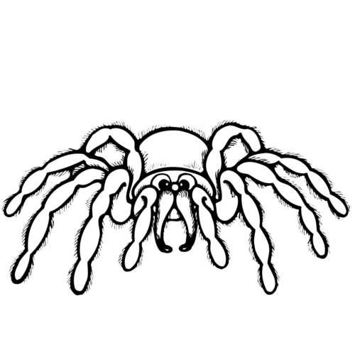 Spider With Mustache