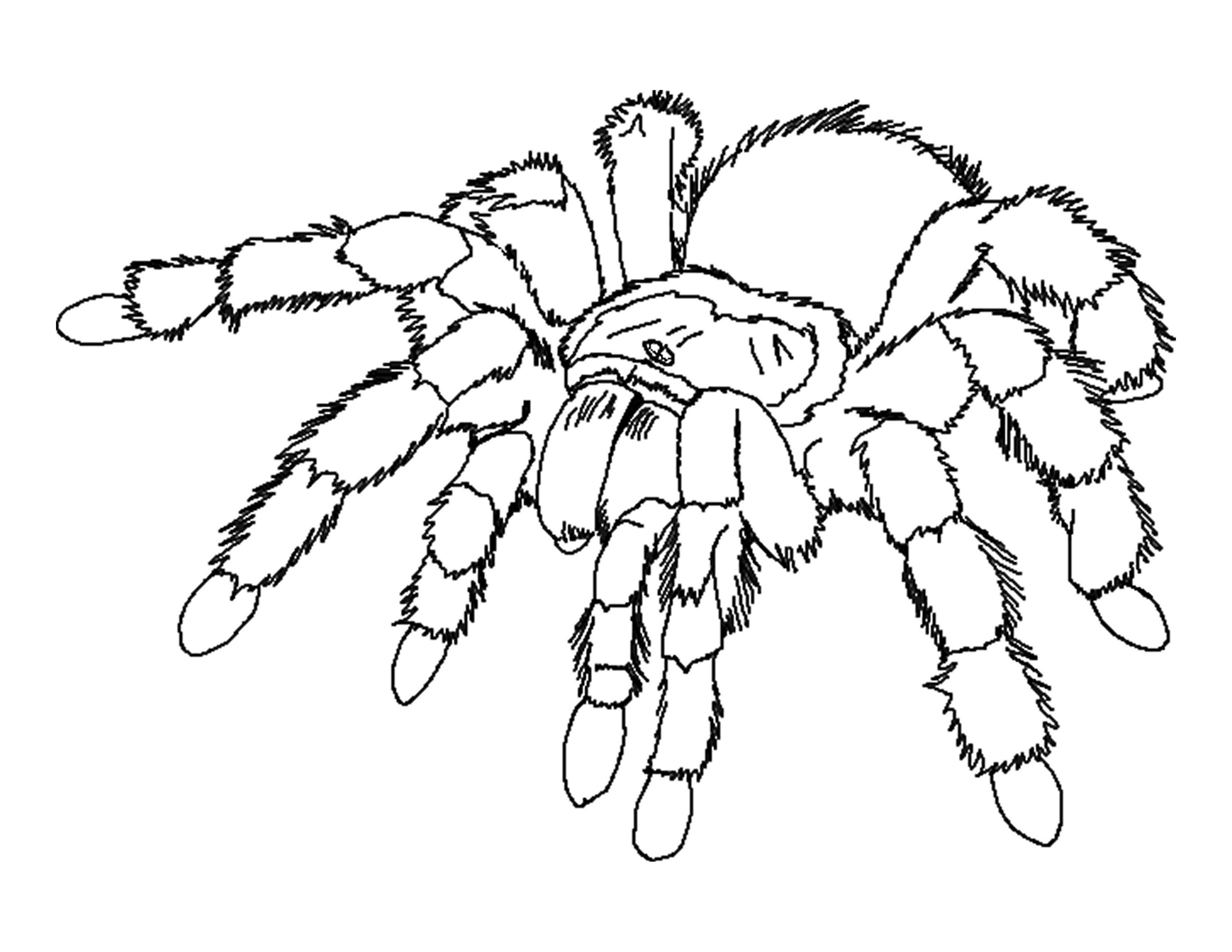 Tarantula Coloring Pages
