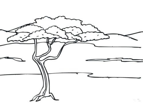 Acacia Tree coloring page