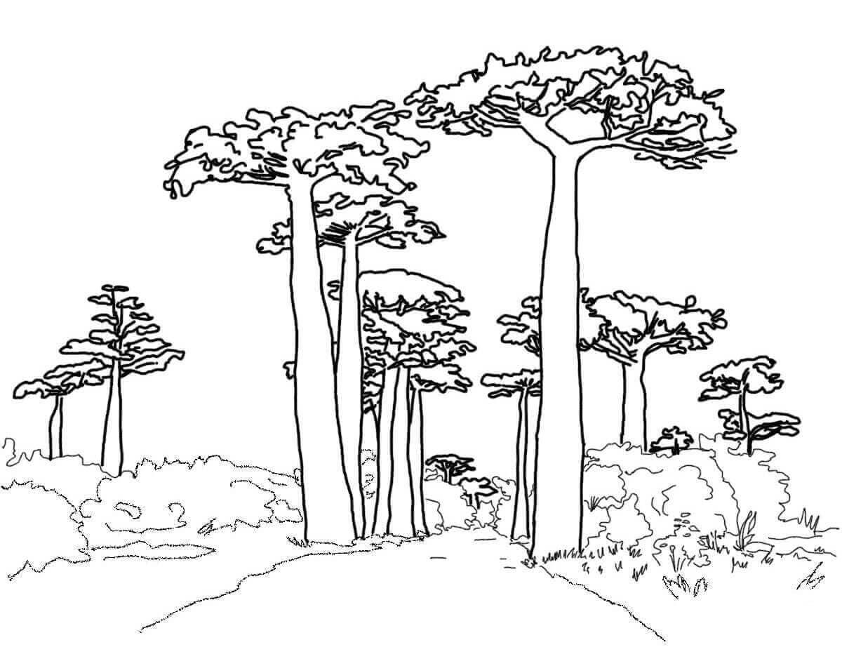 Baobab tree coloring page