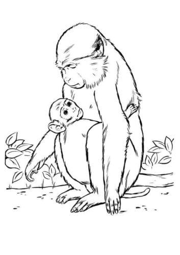 Mama Monkey With Baby Monkey