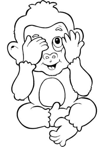 Monkey Is Shy
