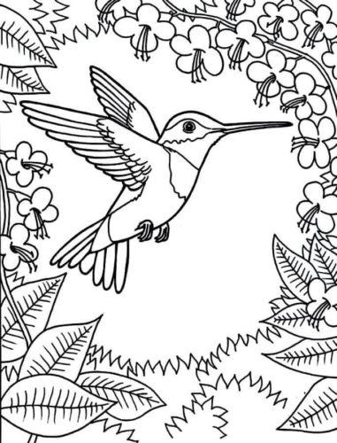 Hummingbird coloring images