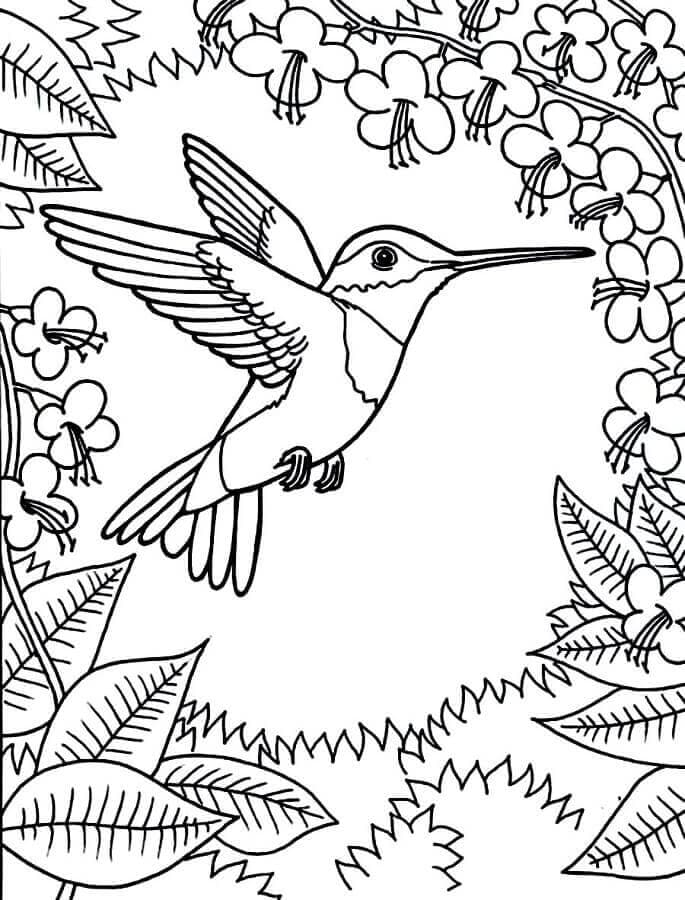 Hummingbird coloring images