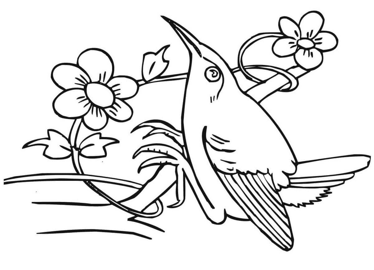 Hummingbirds coloring sheets