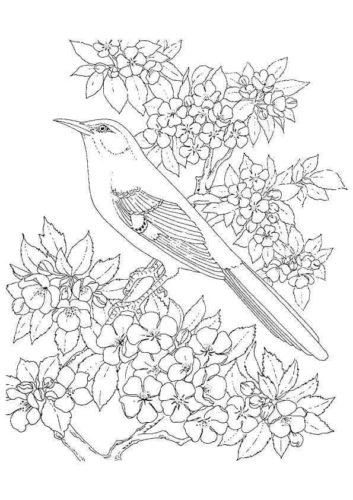 Mockingbird coloring page