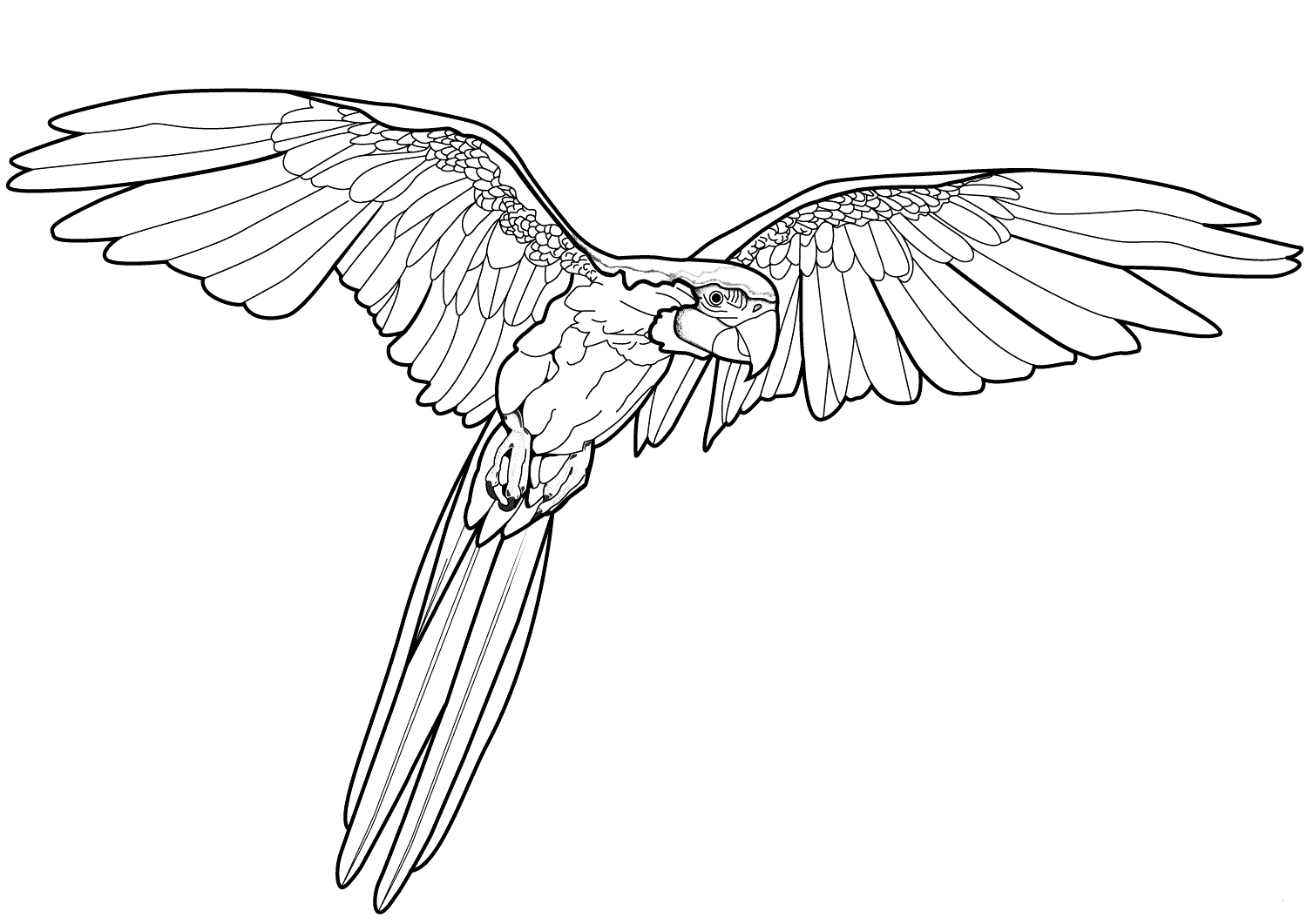 Parrot coloring page