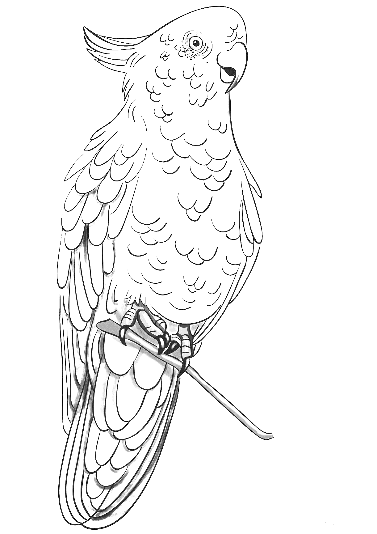 Rose breasted cockatoo coloring page