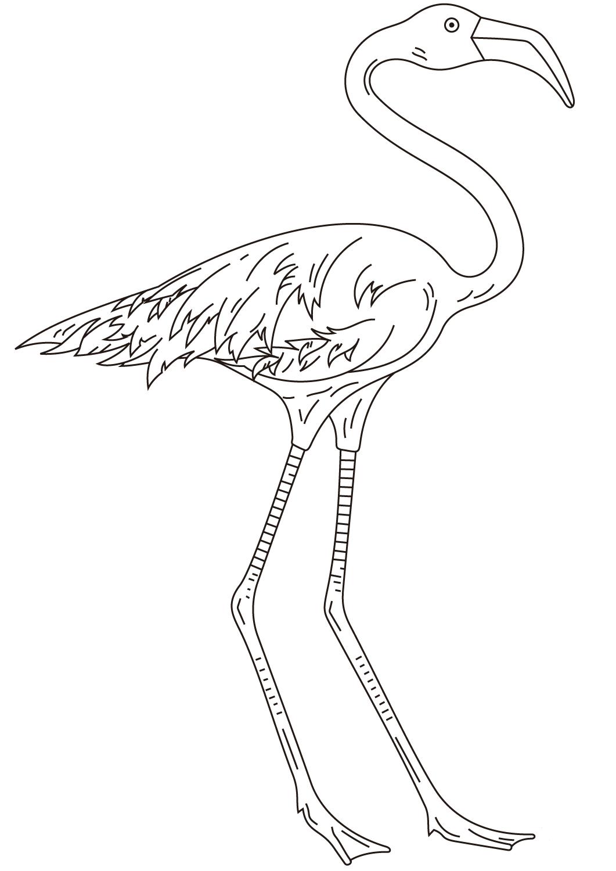 Detailed flamingo