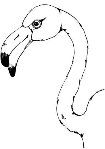 The magnificent flamingo