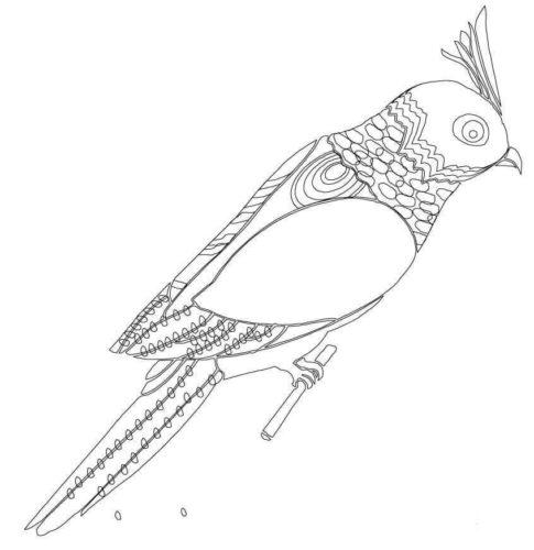 Budgerigar coloring page