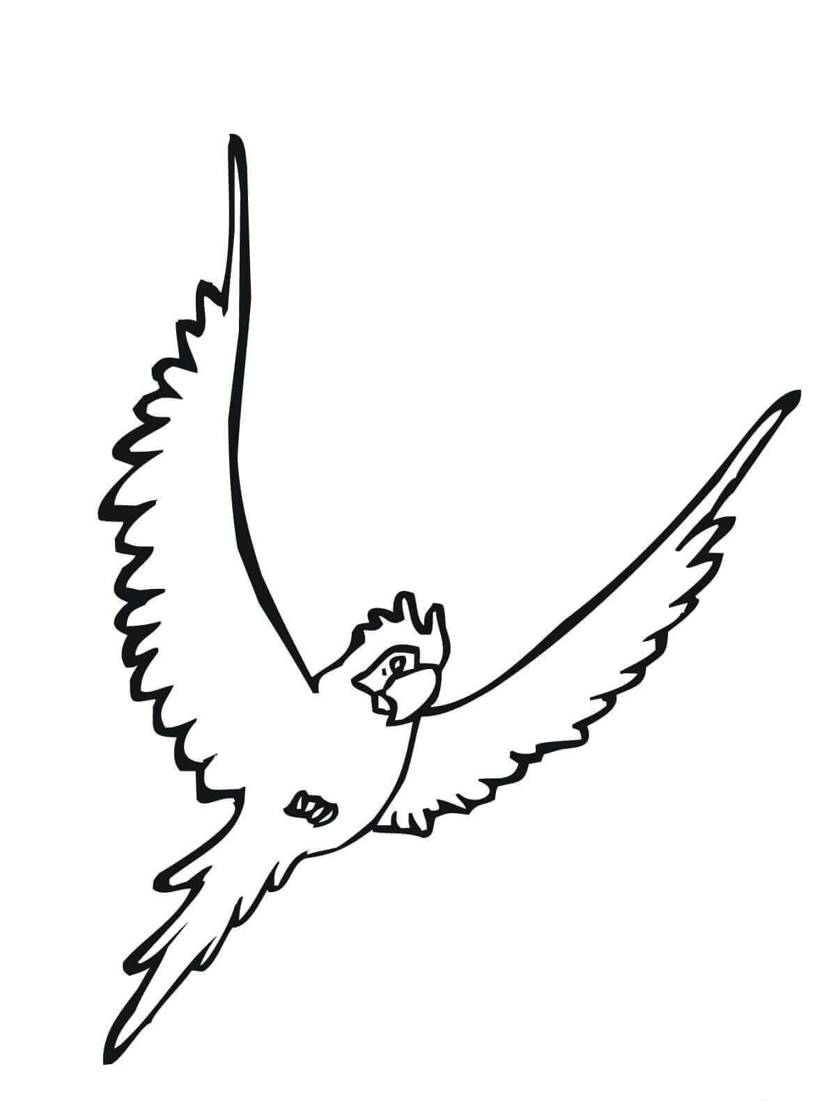 Parakeet coloring page