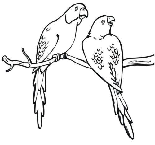 Parrots coloring pages