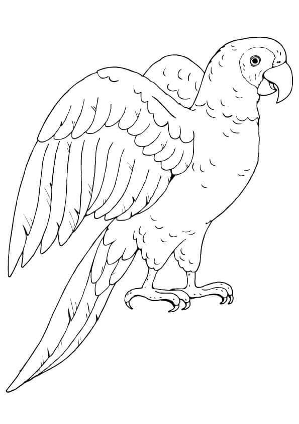 Poicephalus parrot
