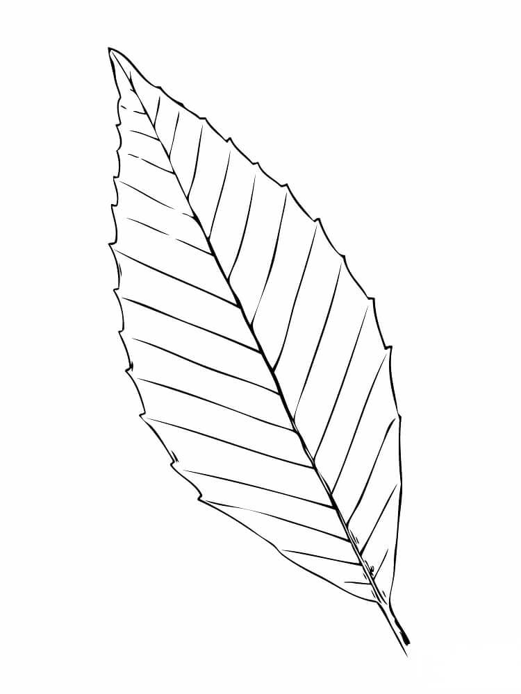 Beech Tree Leaf coloring page