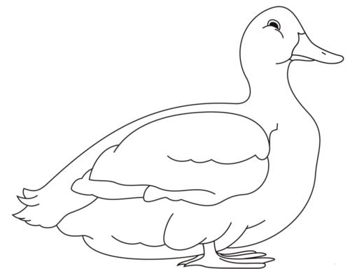 A big fat duck