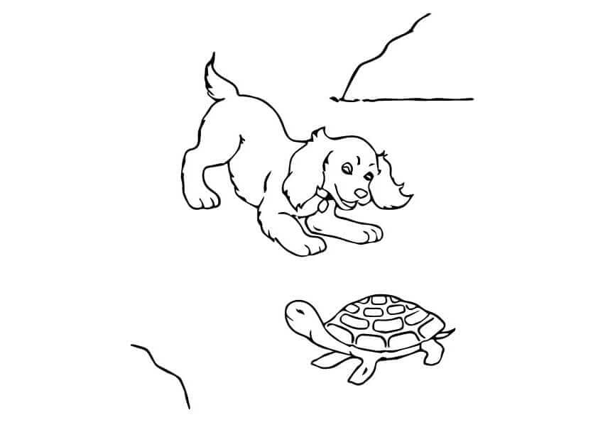 Dog plaing with a turtle
