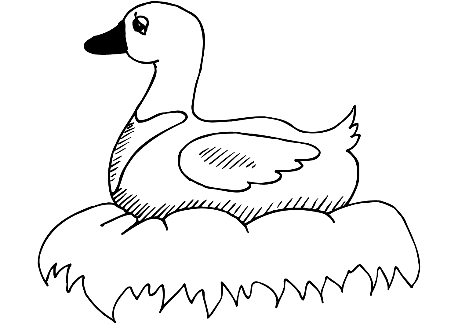 Duck sitting on the nest