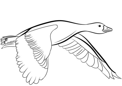 Mallard Duck coloring page