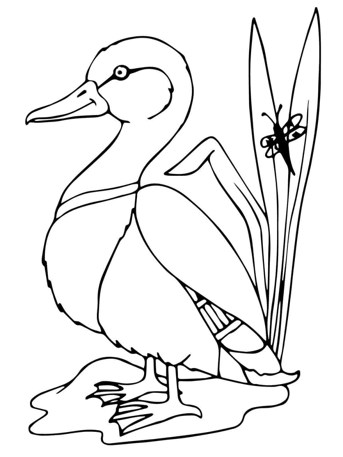 Mallard Duck coloring sheet
