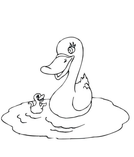 Mama duck swimming with baby duck