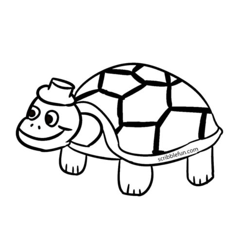 Old and experienced turtle