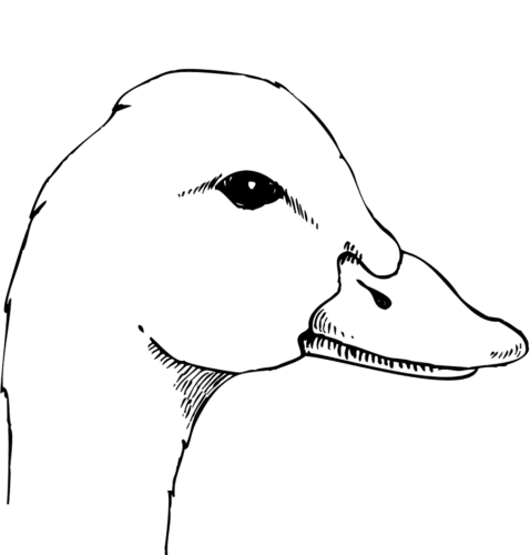Realistic duck coloring pages