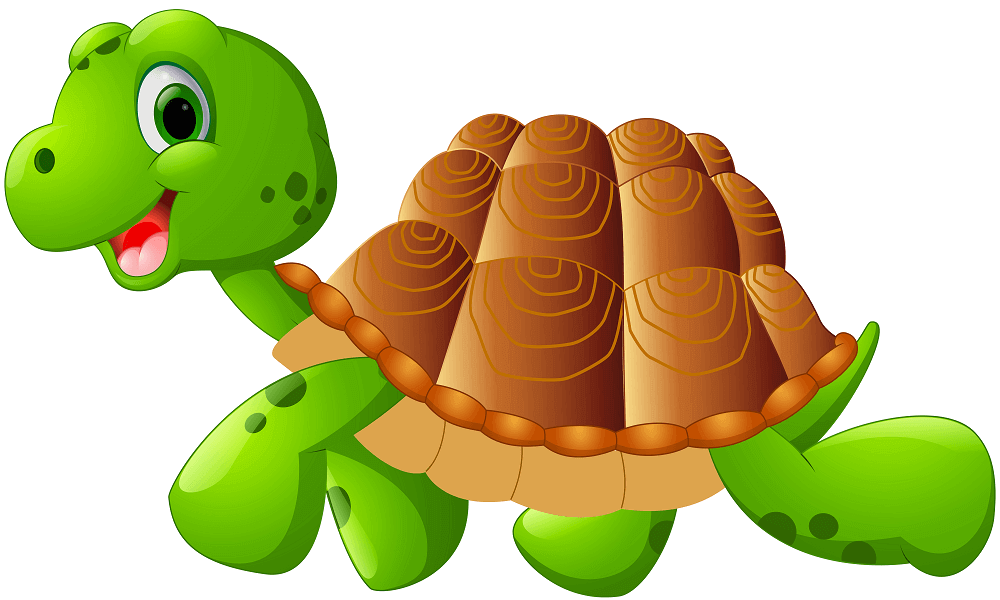 Turtle coloring