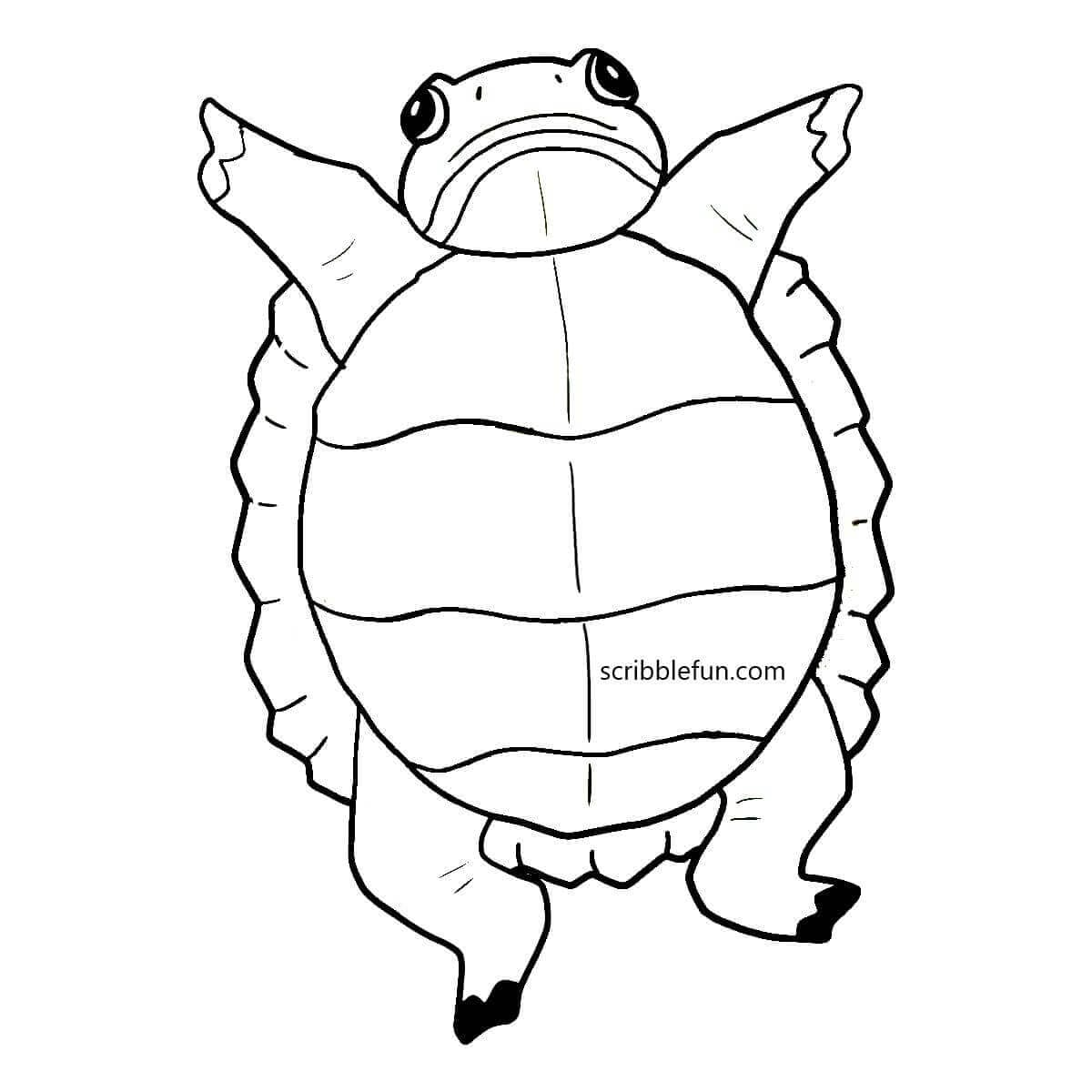 Turtle stretching
